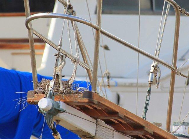 m_Bird nesting on bow
