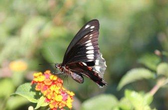 m_Butterfly