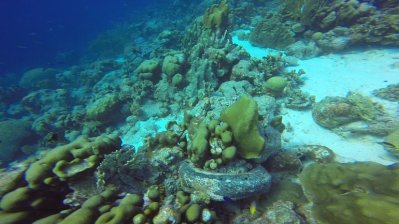 m_Car tyre and Coral