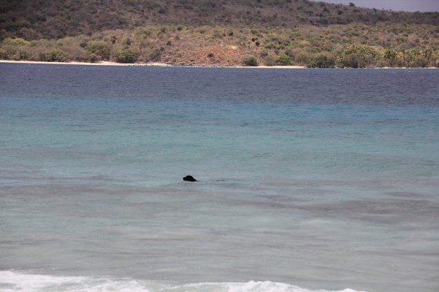 m_Dog swimming