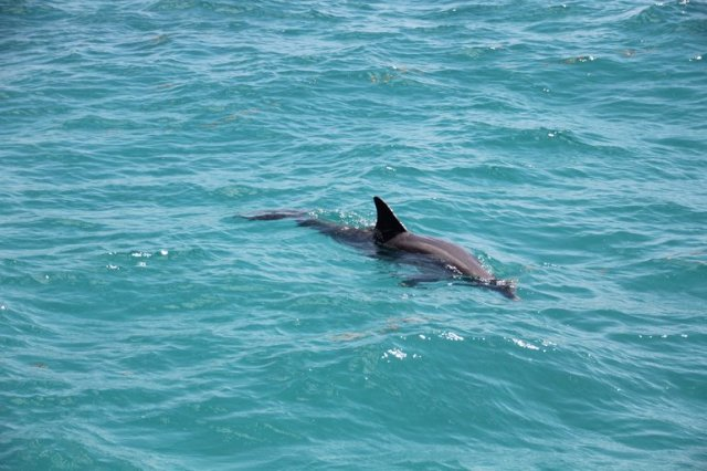 m_dolphin by boat