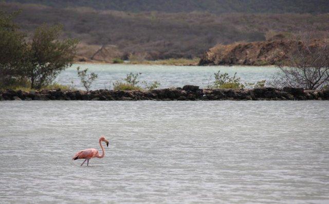 m_Flamingo3