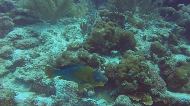 m_Large Parrot fish3
