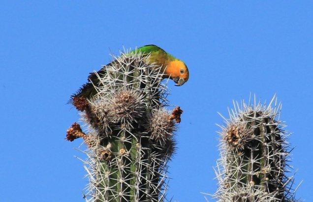 m_Parrots3