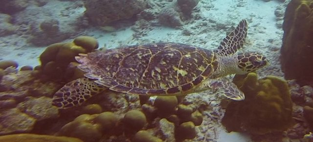 m_Turtle