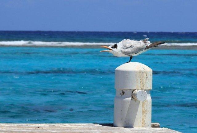 m_Tern on pier