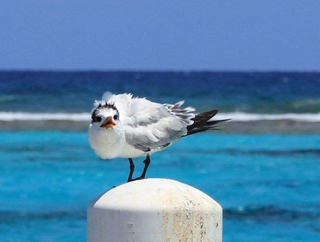 m_Tern on pier2