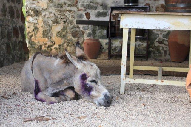 m_Donkey
