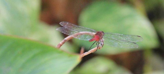 m_Dragonfly