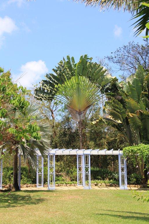 m_Fan palm at botanical gardens