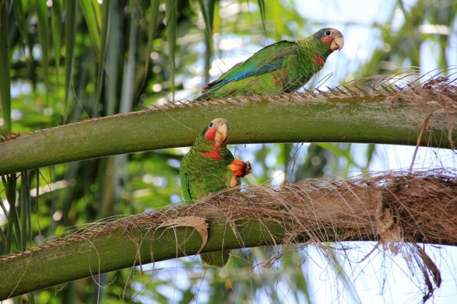 m_Parrots2