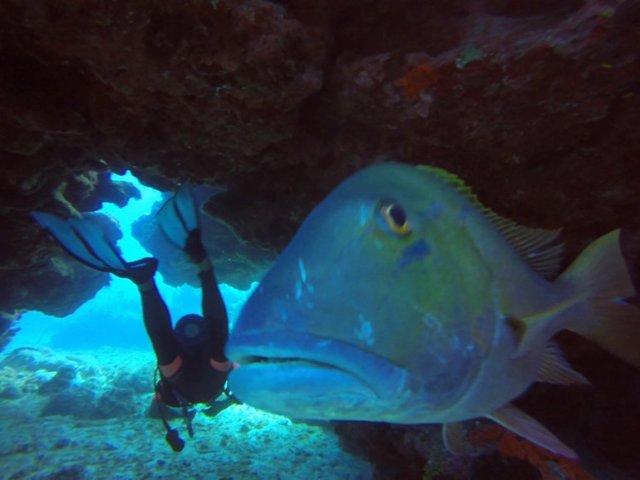 m_Stalking fish