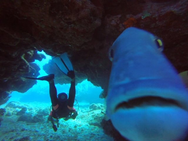 m_Stalking fish4