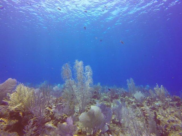 m_Wavy coral