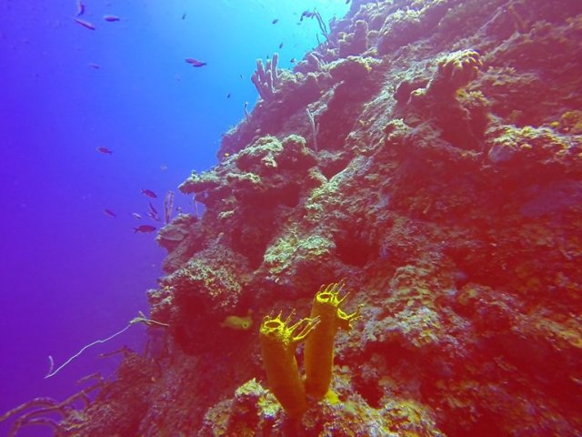 m_Yellow coral