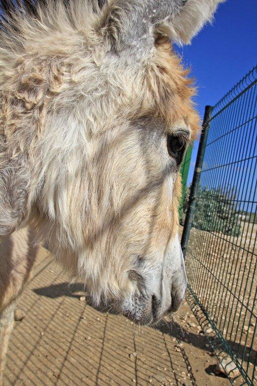 m_Baby donkey again