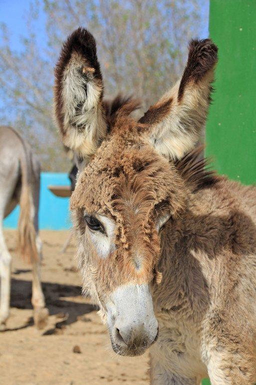 m_Baby donkey