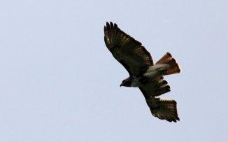 m_Bird of Prey