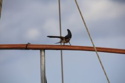 m_Bird visitor