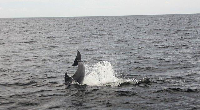 m_Dolphin tail slap