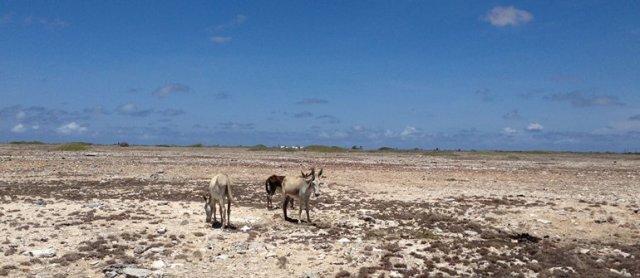 m_Donkeys