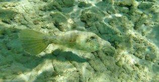 m_File Fish