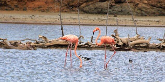 m_Flamingos Gotomeer2