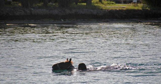 m_Horse swimmin