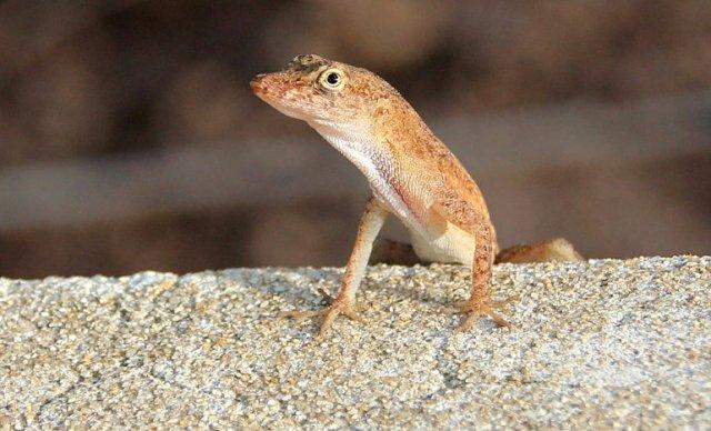 m_Little lizard