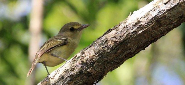 m_Small bird