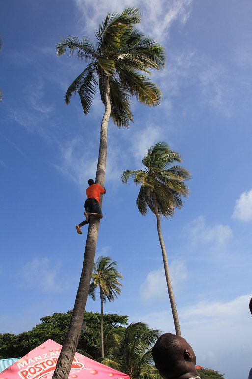 m_Tree Climber