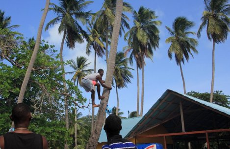 m_Tree climbing competition