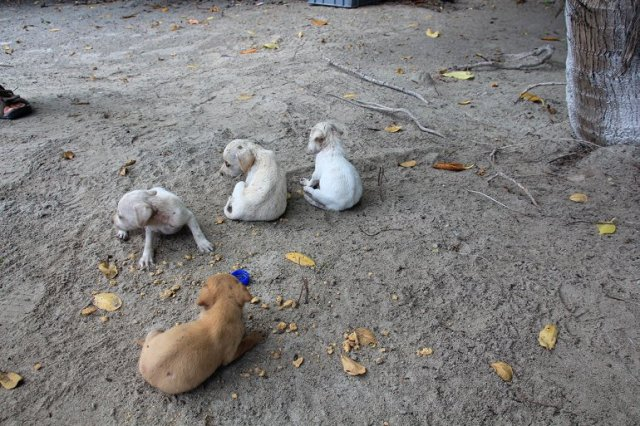 m_Abandoned Puppies