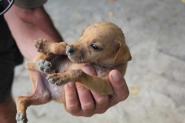 m_Puppy