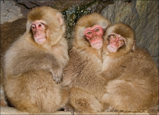 5651 three monkeys on the pipe.jpg