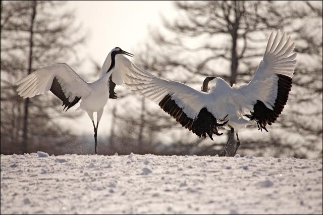 7877 cranes display.jpg