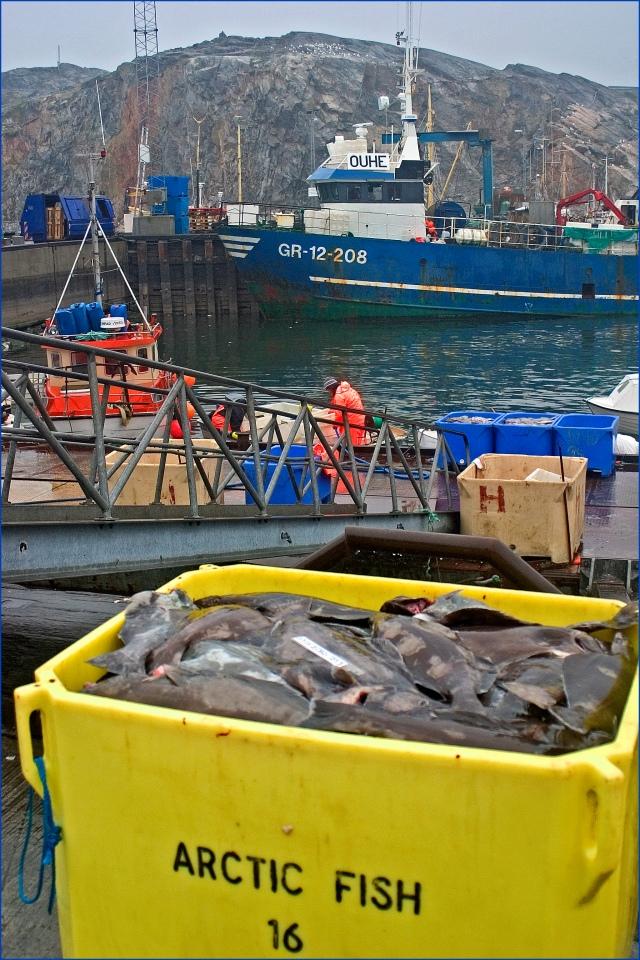 3455-arctic-fish-ilulissat
