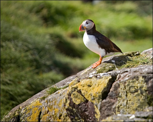 4729-puffin-ready-for-takeoff
