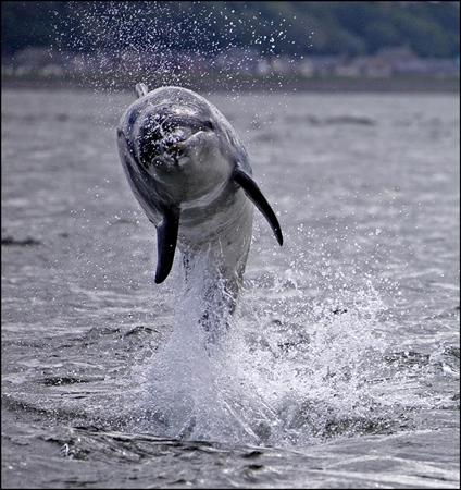 dolphin-exuberance-web