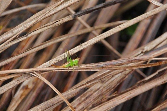 m_grasshopper
