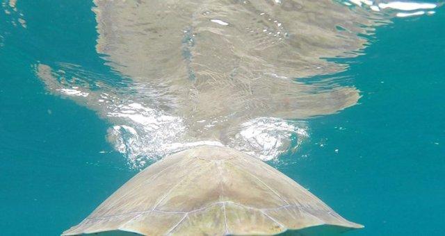 m_Turtle shell