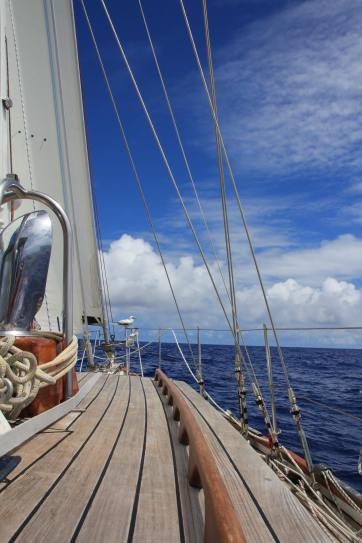 Sailing from Hawaii to Alaska with hitch-hiker