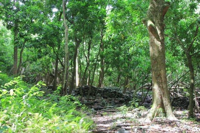 m_Ruins Hakaui hike