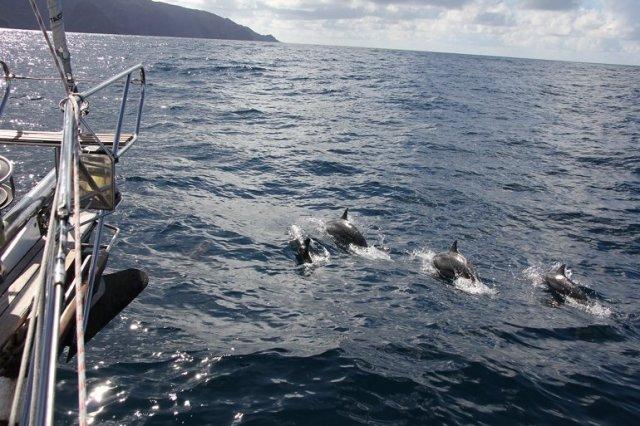 m_Ua Huka dolphins