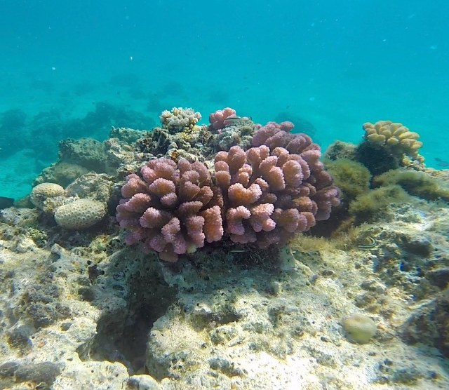 Pink coral-squashed