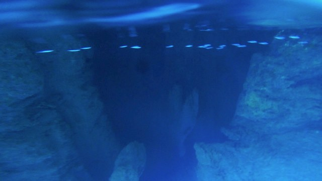 Swallows Cave underwater-squashed